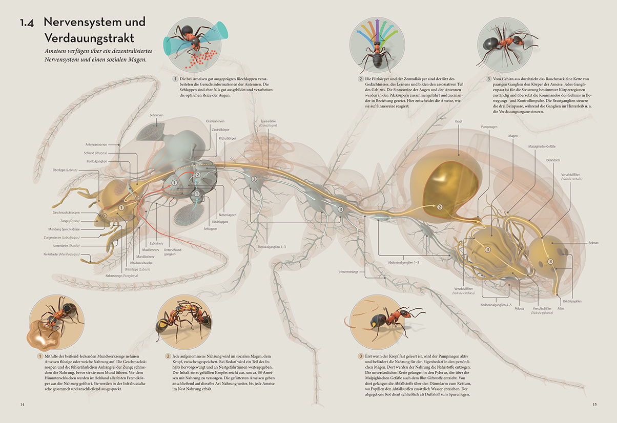 'The ant collective' by Armin SCHIEB c/o SEPIA