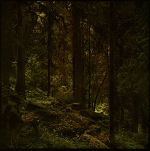 Bernheimer Fine Art Photography : Landscapes - Mat Hennek - Woodlands