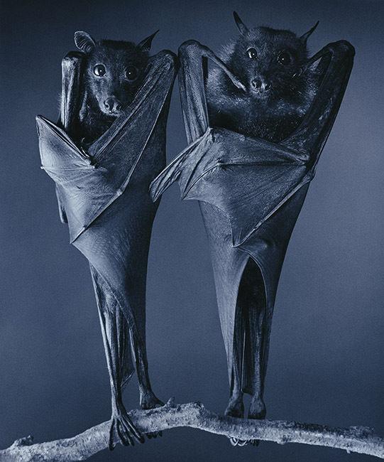 FESTIVAL LA GACILLY-BADEN PHOTO presents TIM FLACH