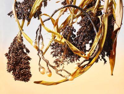 STILLSTARS - Michael Brunn for Edeene Jewellers