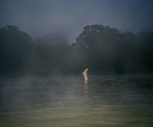 STEPHEN WIRTZ GALLERY : Paul Schiek, Untitled, 2004