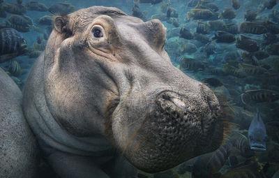 ERLEBNISWELT FOTOGRAFIE ZINGST - STERN präsentiert Tim Flach - 'In Gefahr – bedrohte Tiere im Porträt'