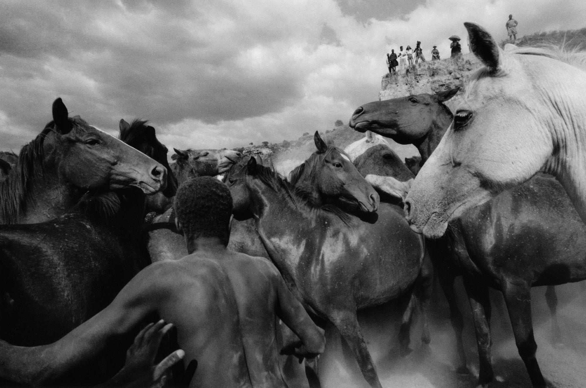 Rabid Horses In Germany! - HD1510×1000