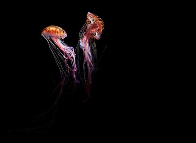 DIRK WEYER 'Medusa'