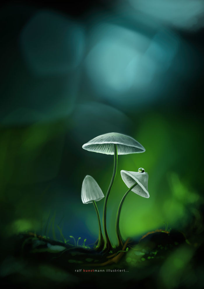 Mushroom - digital painting   RALF KUNSTMANN ILLUSTRIERT...