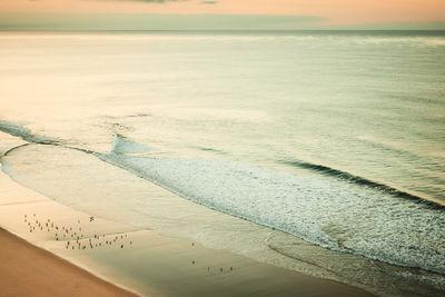 Early birds on the beach