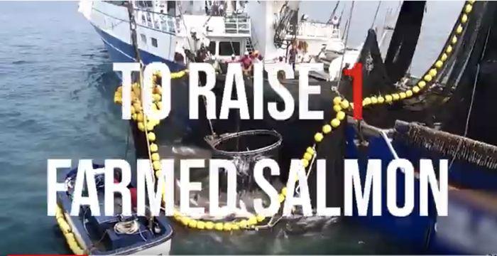 Eco Hustler - HOOK LINE AND SINKER - Oceans Activist Tackles M&S On Dodgy Salmon -