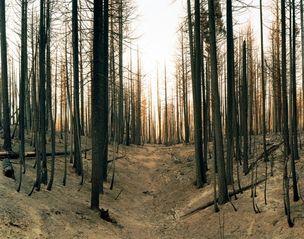 Gallery I/D : Sascha Bezzubov - Wildfire