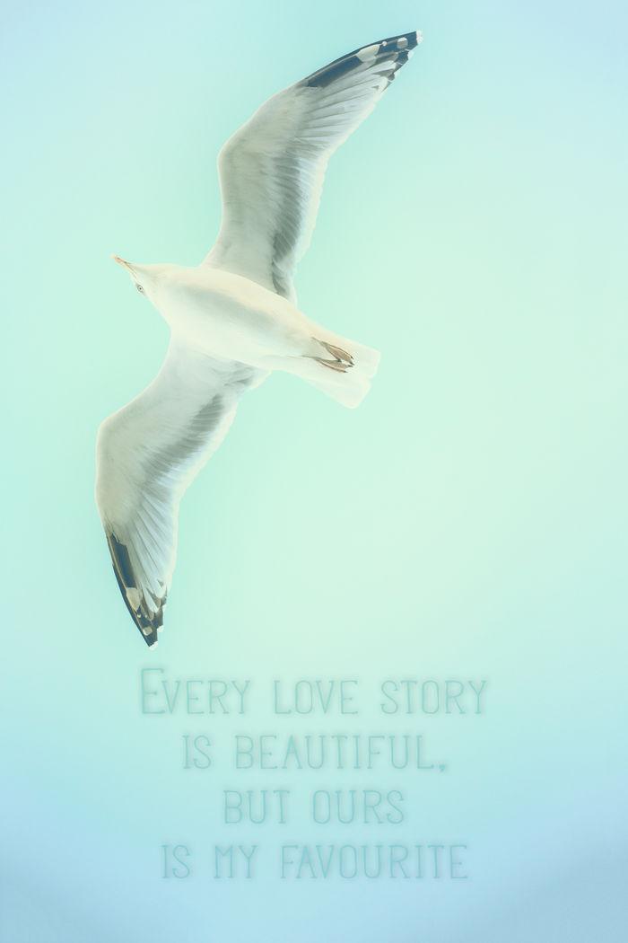 Seagull - UWE MERKEL