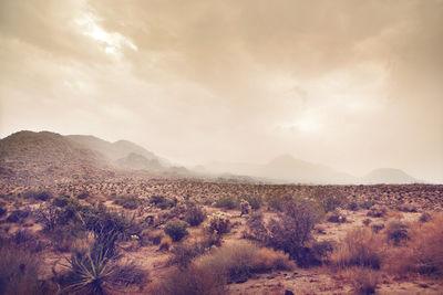 MARKUS MUELLER Landscape (personal work)
