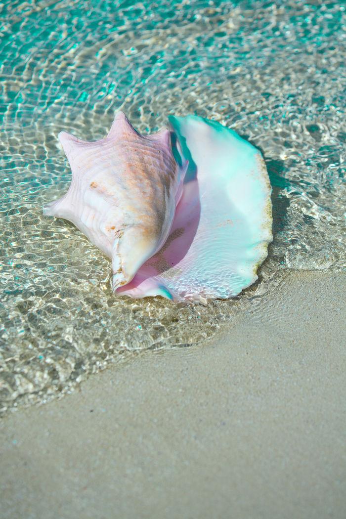 Seashell - UWE MERKEL
