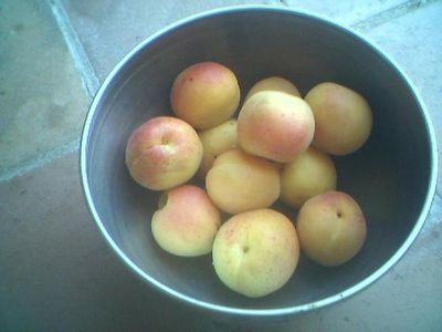 Apricots of Provence