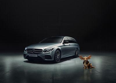 IGOR PANITZ PHOTOGRAPHY: Mercedes E-Klasse Hund