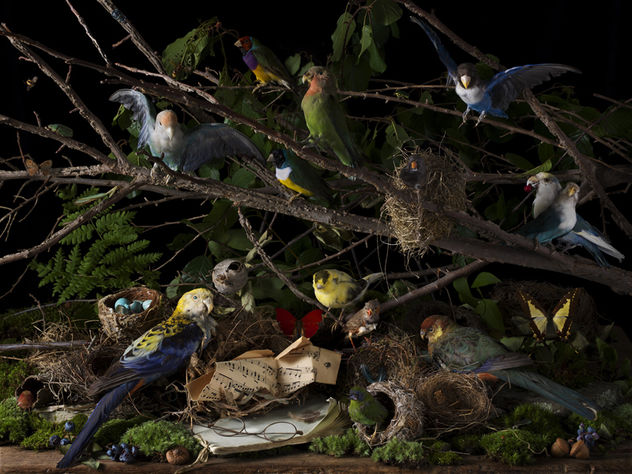 Paulette Tavormina 'A Concert of birds' / ROBERT MANN GALLERY, NEW YORK (October 25 - December 22, 2018)