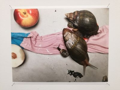 SUZANNE TARASIEVE : Juergen Teller 'Leg, snails and peaches' (13 JANUARY – 03 MARCH 2018)