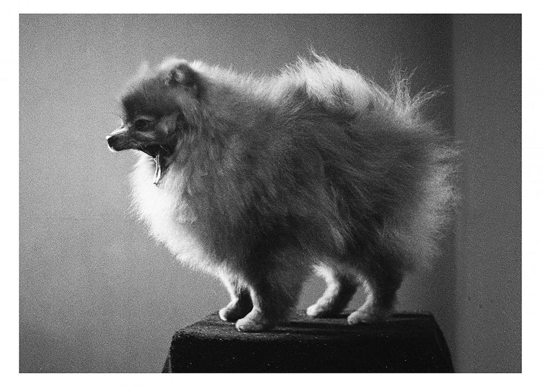 COSMOPOLA - Benjamin Hampson - Dogs