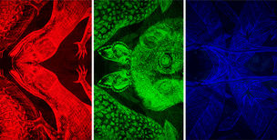 CARNOVSKY presents RGB Silk Scarves