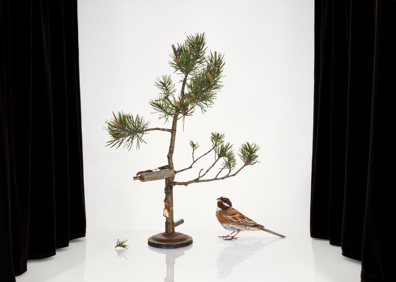 Sanna Kannisto 'Sense of Wonder' / Exhibition The Finnish Museum of Photography