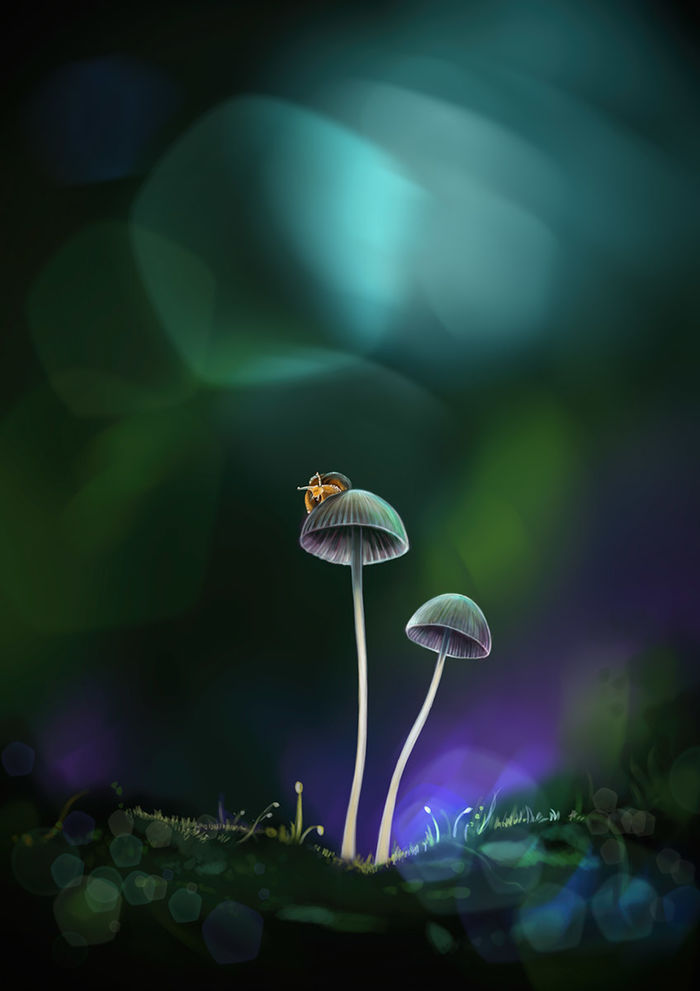 Mushroom 02 - digital painting   RALF KUNSTMANN ILLUSTRIERT...