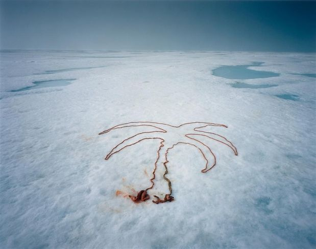 Michael Hoppen Contemporary : Scarlett Hooft Graafland