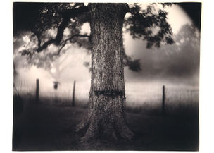 The Family and the Land : Sally Mann