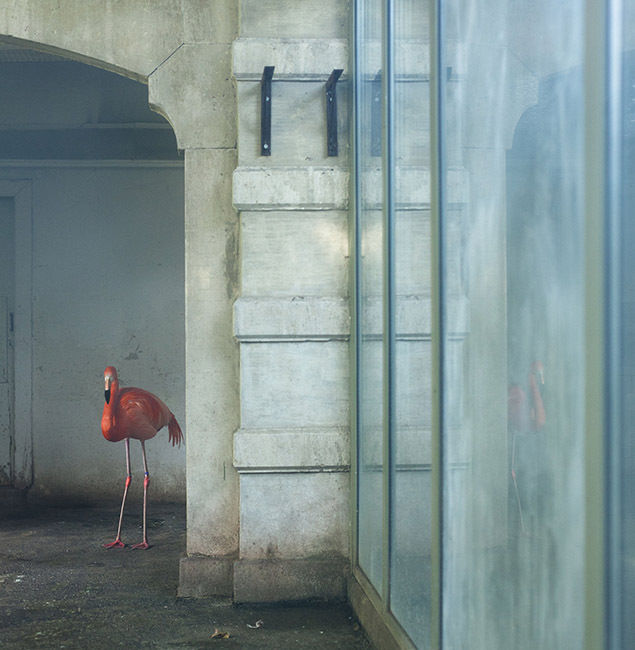 FESTIVAL LA GACILLY-BADEN PHOTO presents Eric Pillot