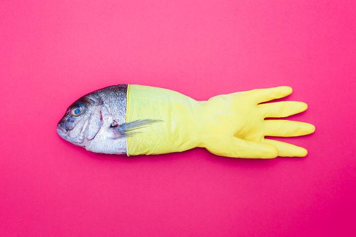 Dystopian Fish Series