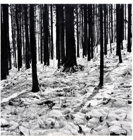 GOSEE ART: Walking in the Mountains - February 162.2x162.2cm, Charcoal pencil and paper on canvas, 2017 ©Takeshi Honda