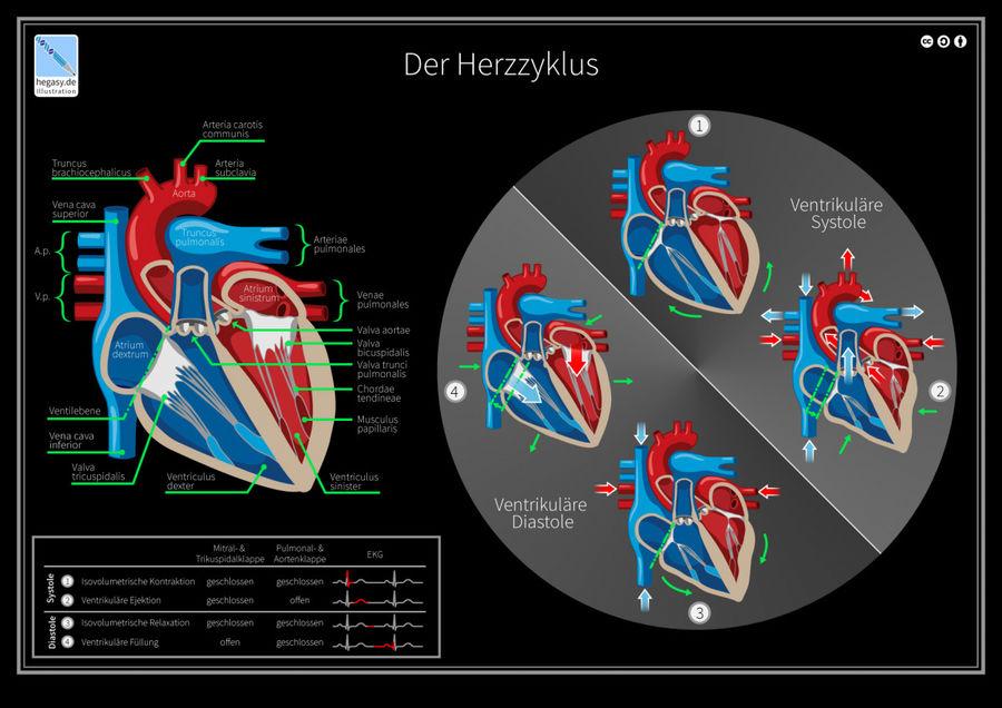 Dr. Guido Hegasy - Neuzugang bei kombinatrotweiss