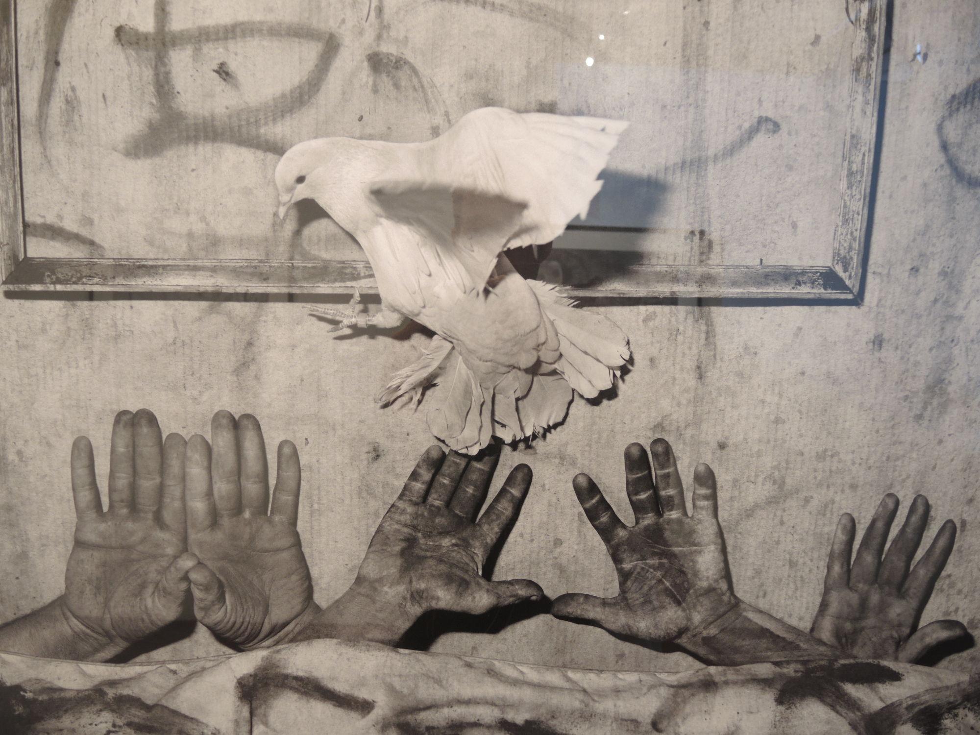Roger Ballen 'Asylum of the Birds'