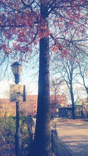 GOSEE - Washington Heights, NYC