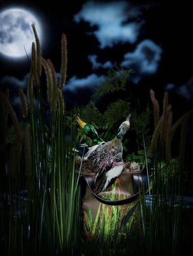 TOM SEELBACH - The Nest for Material Girl