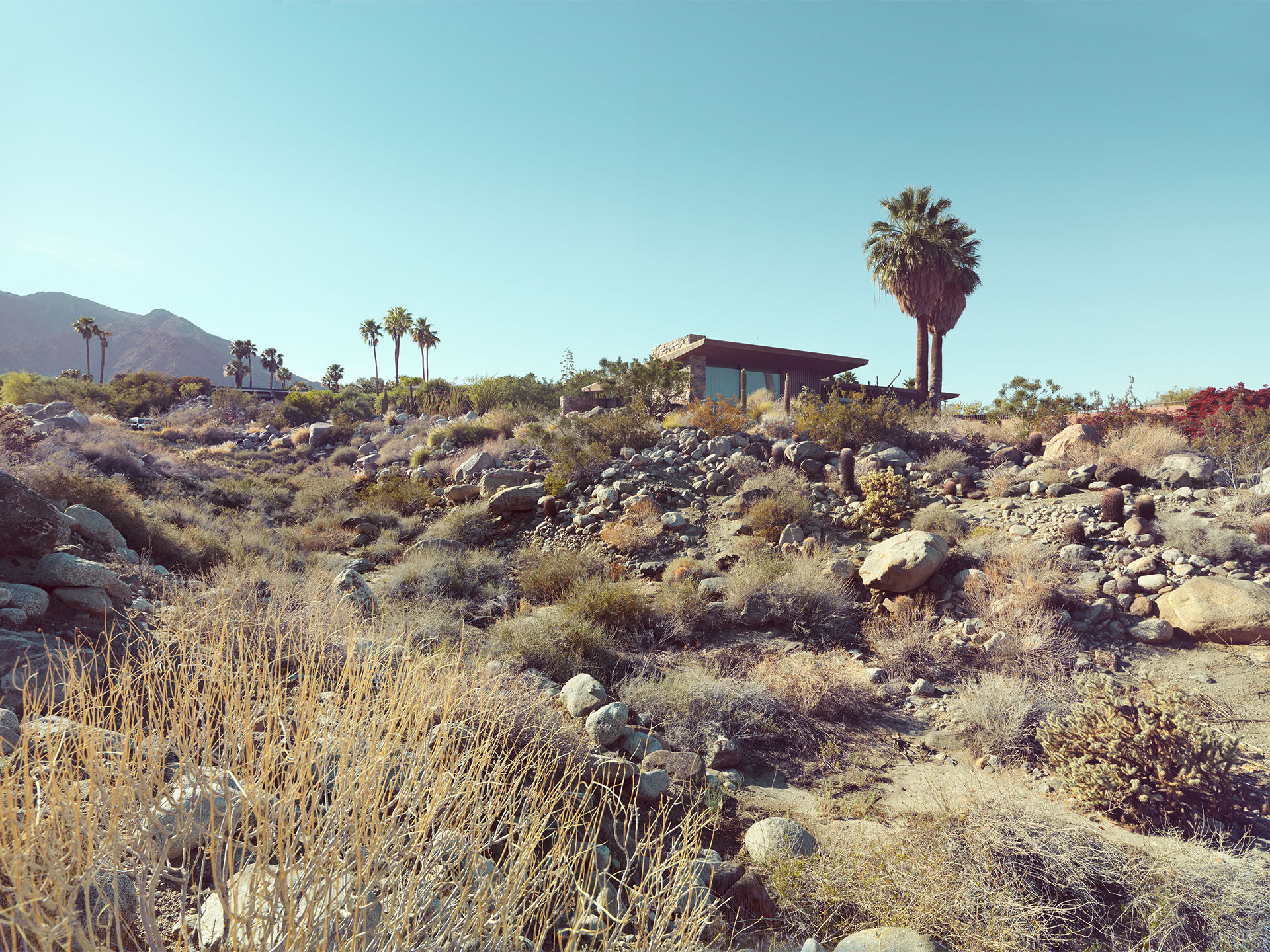 ANKE LUCKMANN: Palm Springs