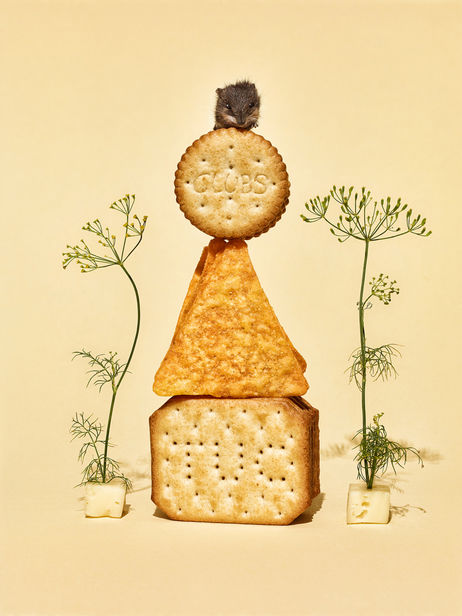 "ROCKENFELLER & GöBELS: ""MOUSE IN CHEESY CRISPY DREAMLAND!"" BY SABINE SCHEER"