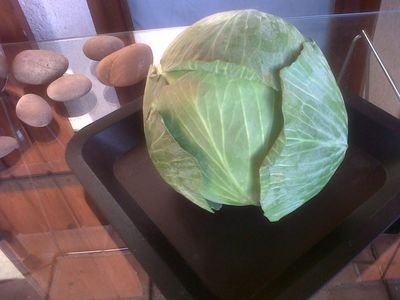 White Cabbage of Provence