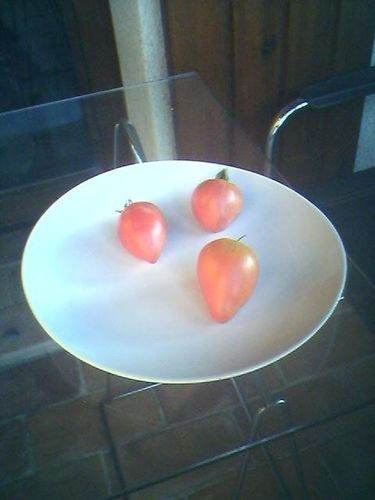 Tomatoes of Provence