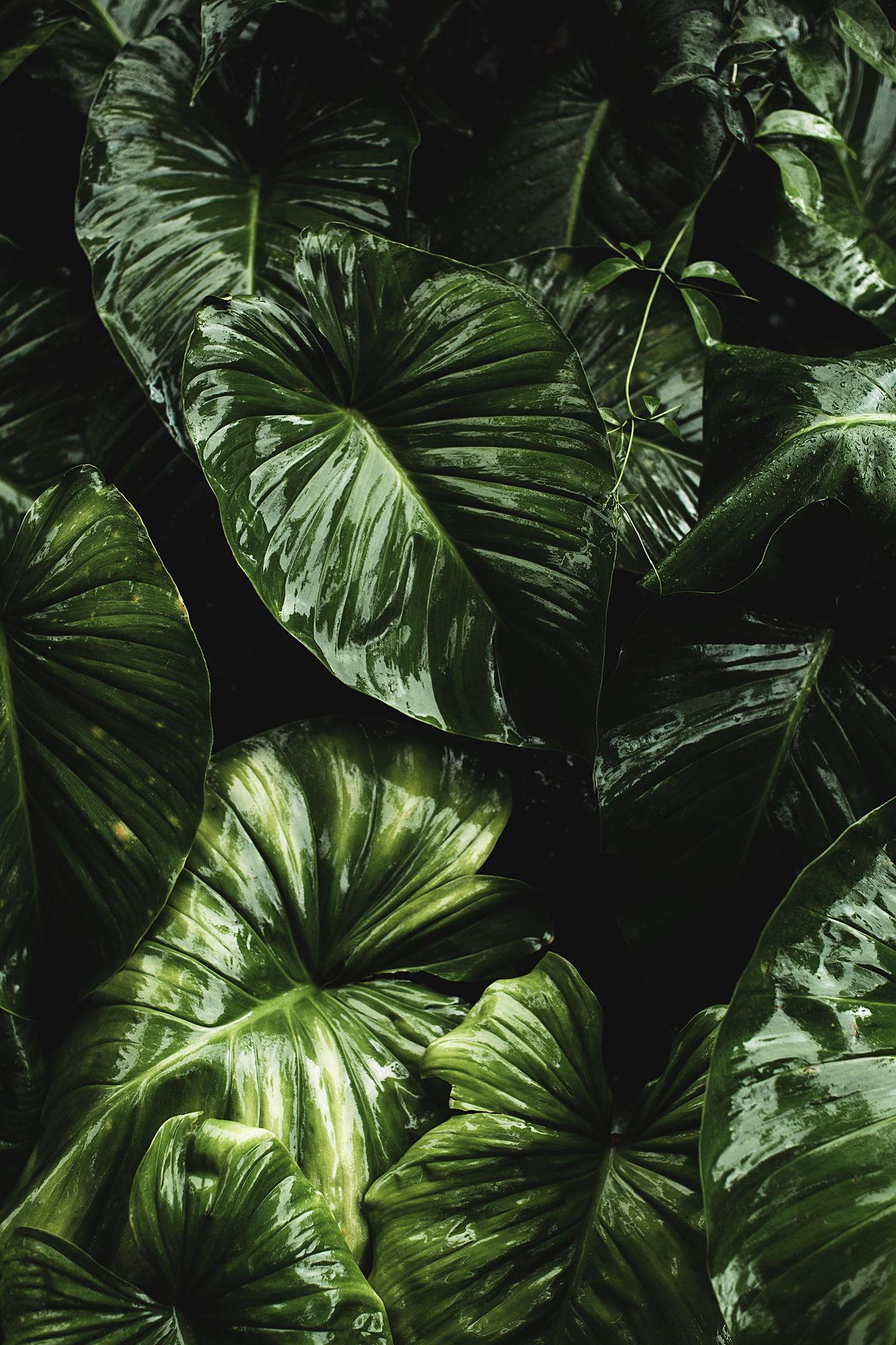 BANRAP & TOBIAS BOSCH  'PHOTO EXHIBITION' & GET TOGETHER at MARSIL - BOUTIQUE HOTEL / PHOTOKINA 2018