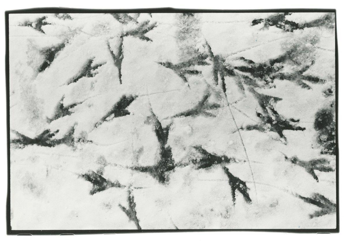 MASAHISA FUKASE 'Solitude of Ravens'