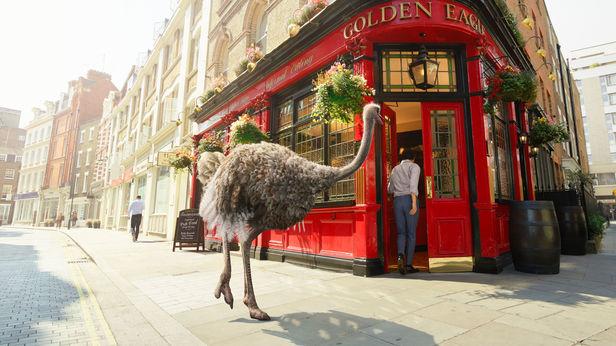 RECOM CGI : EUROSTAR Campaign with a CG Ostrich