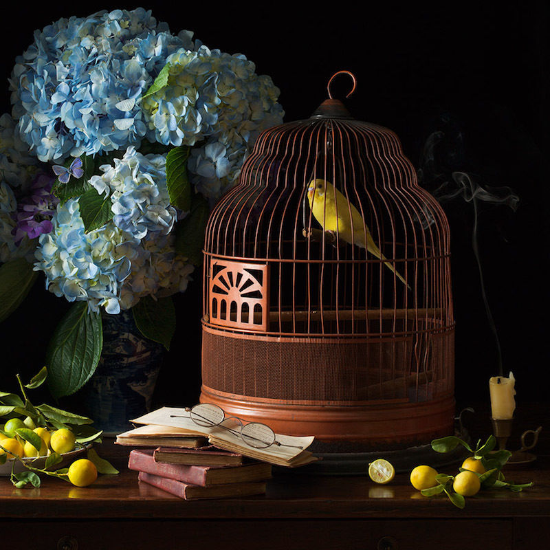Paulette Tavormina 'A Concert of birds' / ROBERT MANN GALLERY, NEW YORK (October 25 - December 22, 2018)