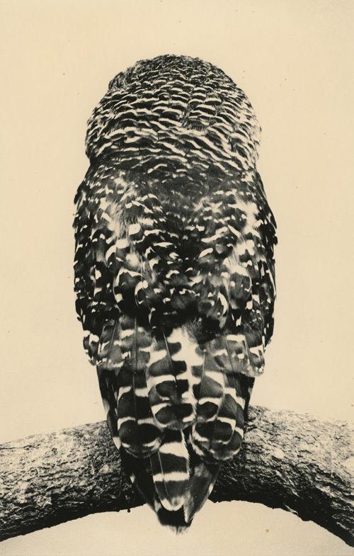 YANCEY RICHARDSON GALLEY - Masao Yamamoto