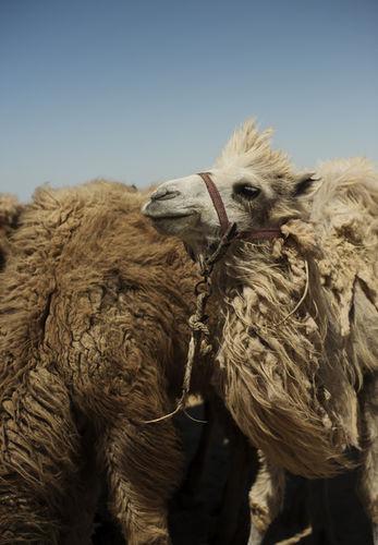 Felix Odell c/o CAMERALINK in Uzbekistan for Conde Nast Traveller