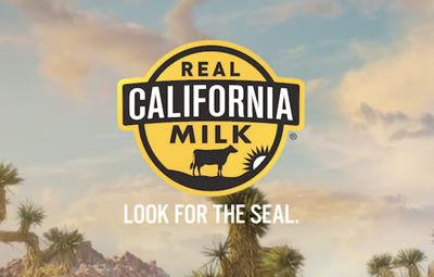 STILLSTARS - Natasha van Velzen foodstyling for Real California Milk