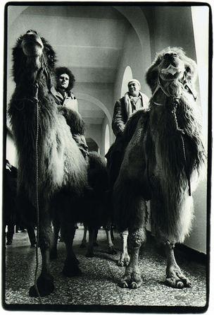 SMKP - Faszinierende Dokumente : Bernd Jansen, Günther Uecker und Klaus Rinke in den Gängen der Kunstakademie auf Kamelen, 1978