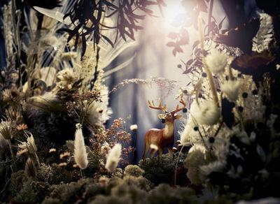 STILLSTARS - Lars Ranek for A Blooming Tale