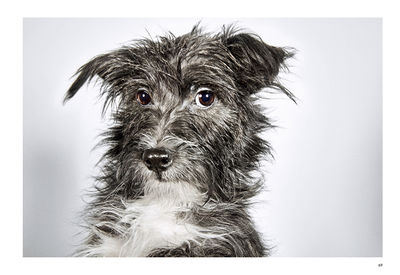 'Rescue Me' Dog Adoption Portraits and Stories from New York City Photographs by Richard Phibbs