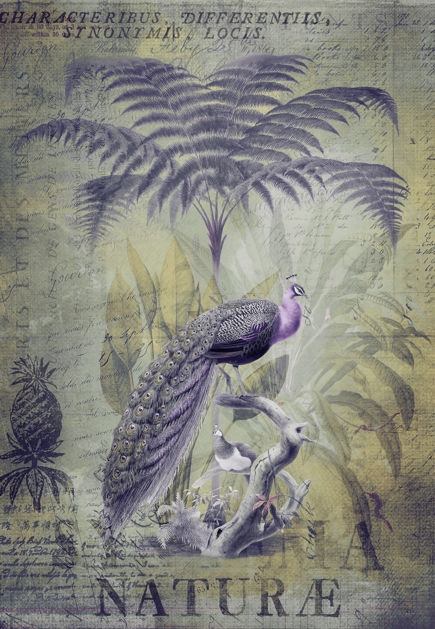 Peacocks Tropical Paradise