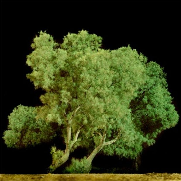 BERNHEIMER : Inner Landscapes - Israeli Contemporary Photography