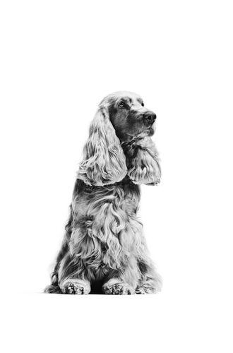 Dan Burn-Forti for Royal Canin