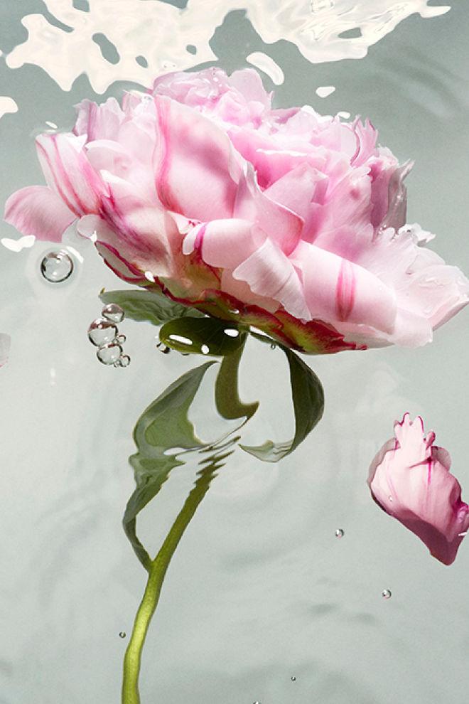 Juul van Alphen for Stella McCartney Peony Fragrance